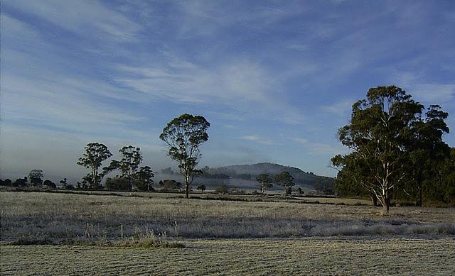 killiecrankie farm -- around the farm -- live christmas trees tasmania