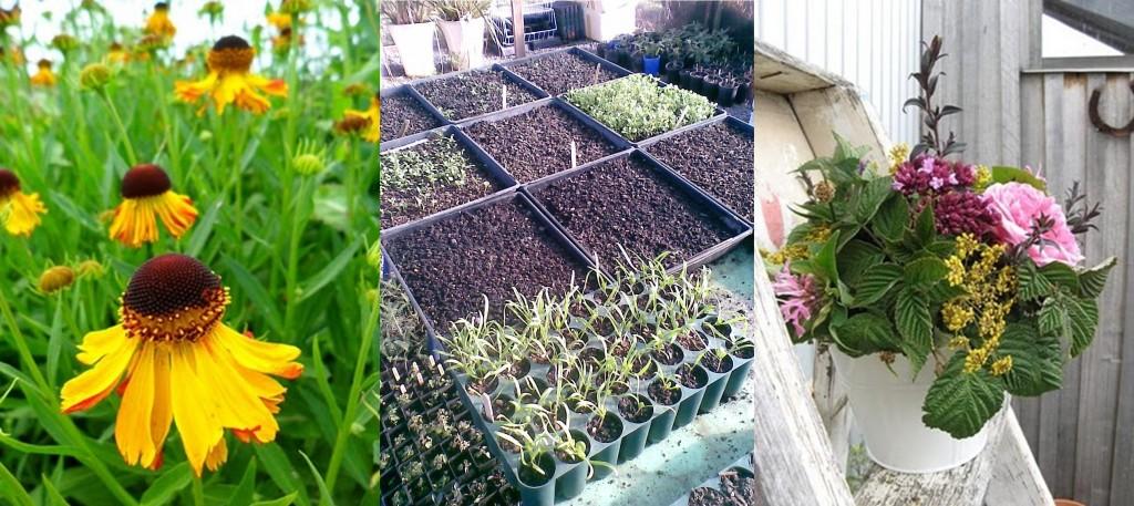killiecrankie farm -- in the garden -- sustainability