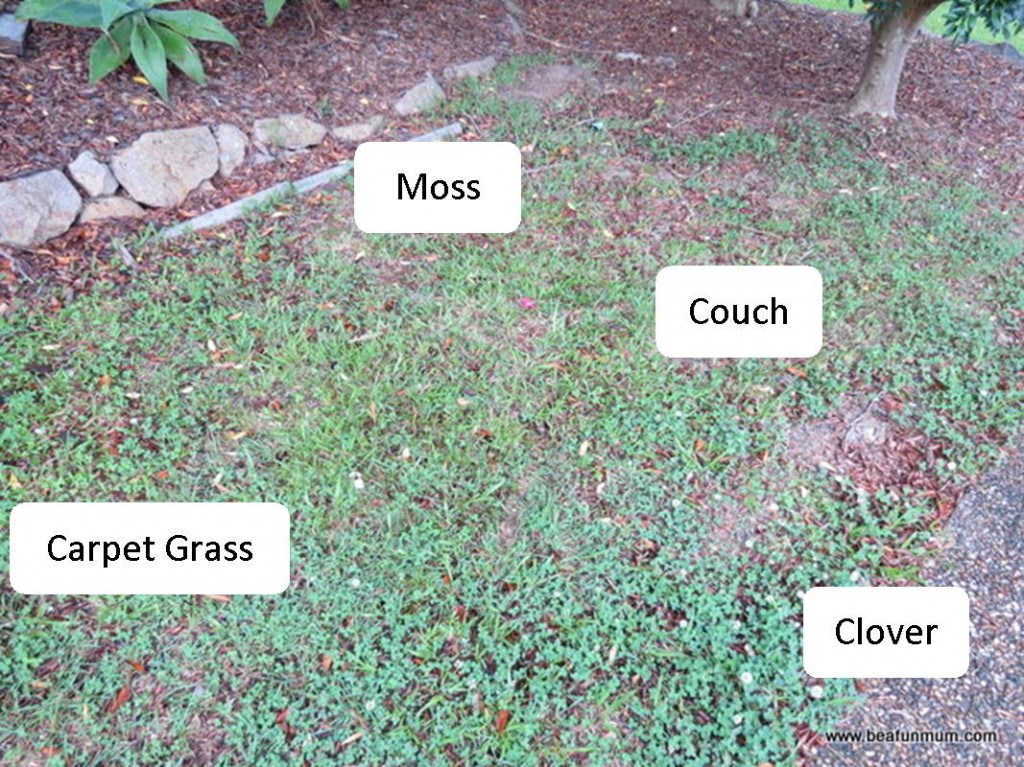 problem areas turf -- deciding on the right turf for your area -- moss, carpet grass, clover