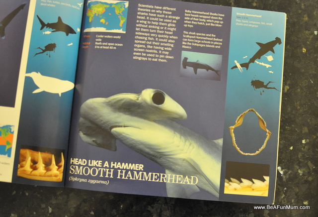 shark book -- hammerhead shark