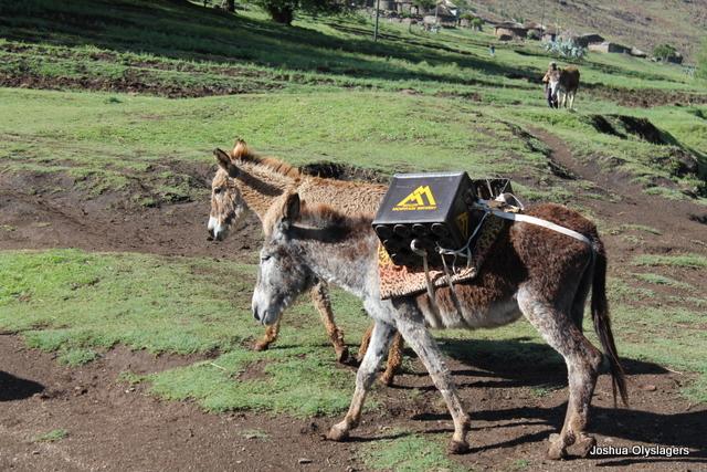 donkey's in lesotho