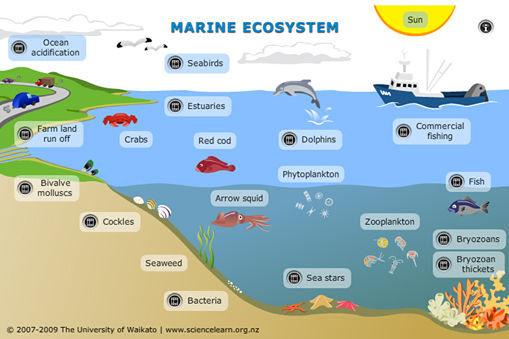 Marine-ecosystem