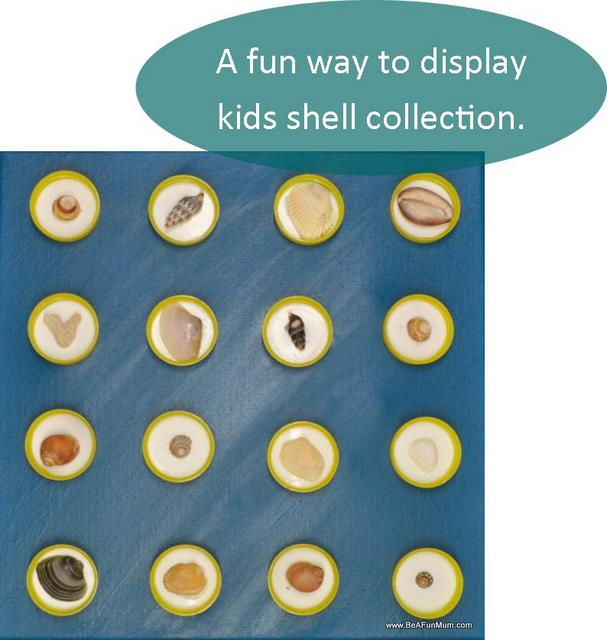 shell shadow box -- display kids shell collection
