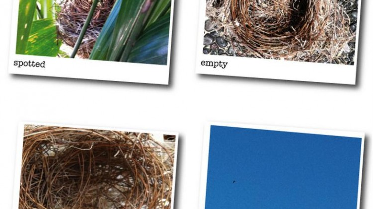 A Nest: What You Can Do With Plenty of Time