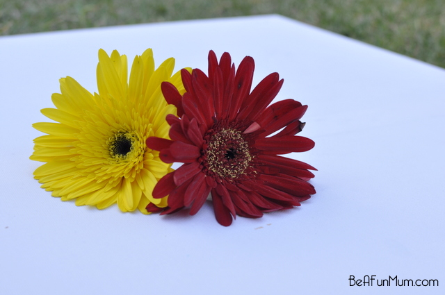 nature crafts -- Decontrusting flowers