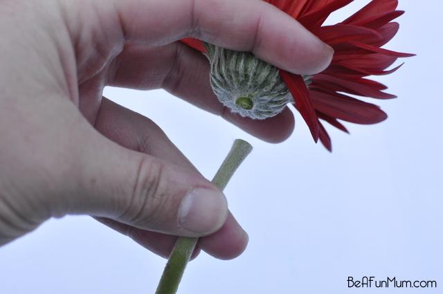 nature crafts -- Decontrusting flowers -- cut stem off