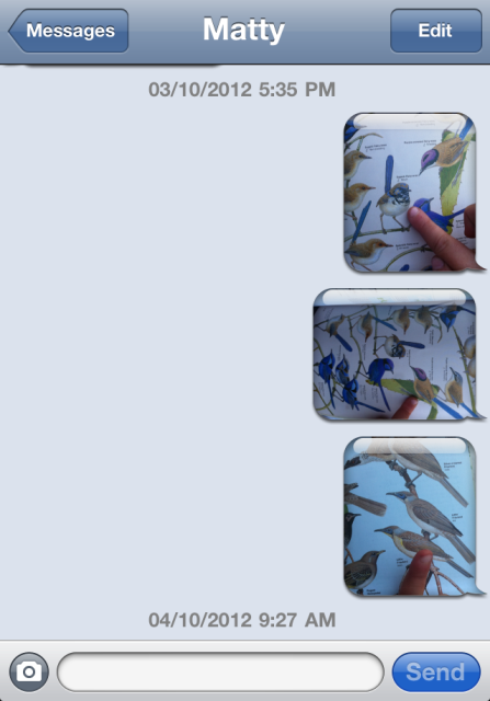 sms birds