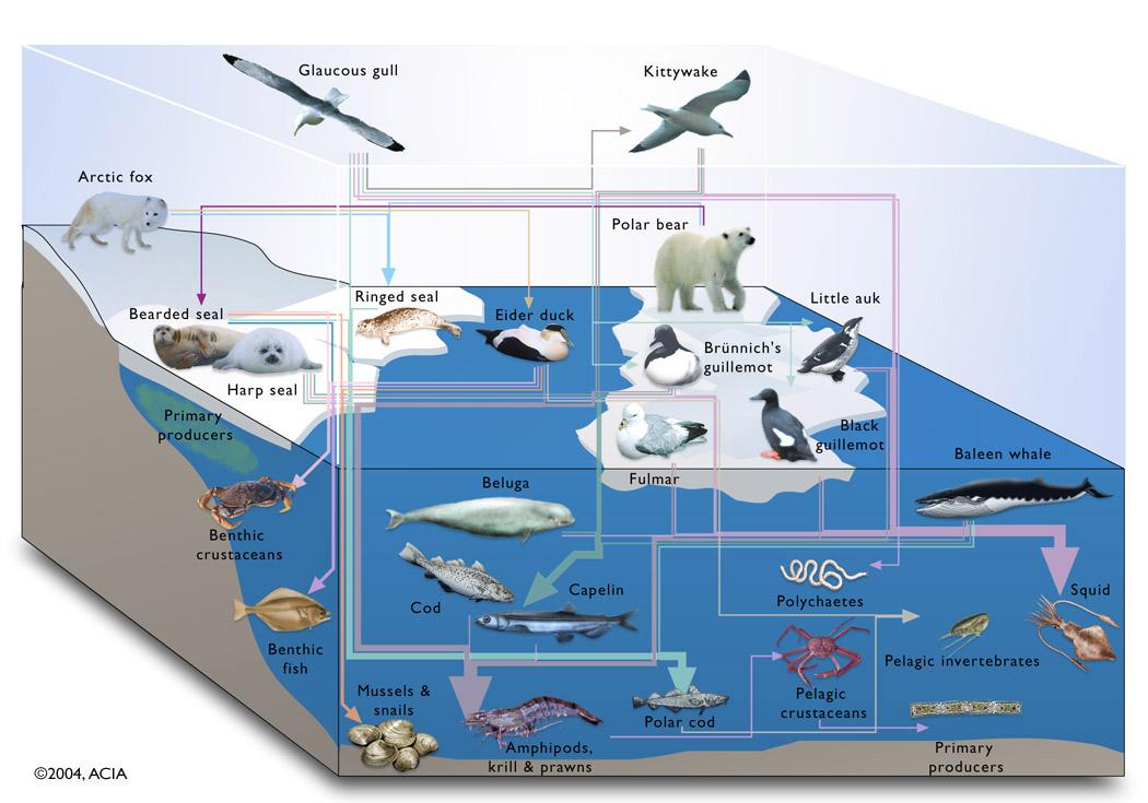 polar ecosystem