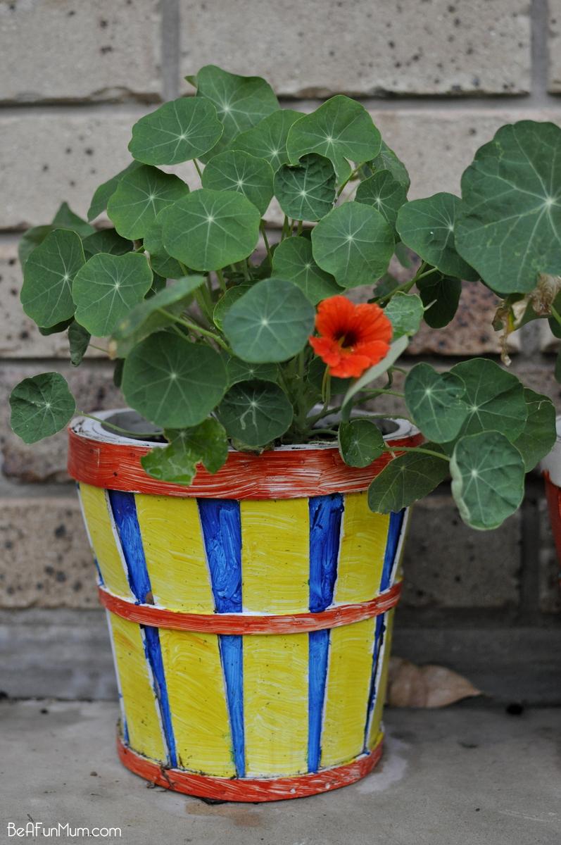 planting Nasturtiums