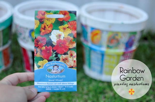 planting Nasturtiums - how to plant Nasturtiums