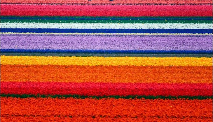 Rainbow Garden Step 1 — Rainbow Pots