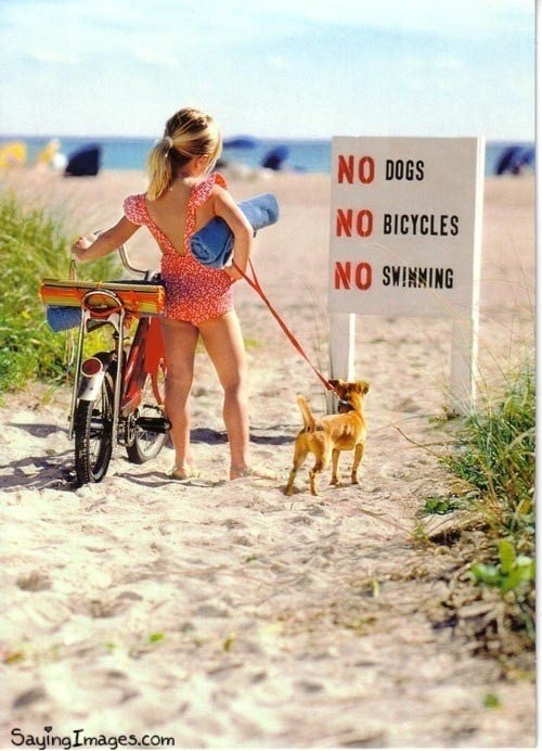 No Dogs, Bicycles And Swimming