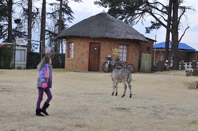 pony trek malealea - Lesotho, Afica