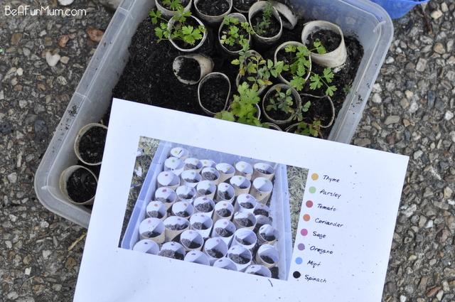 planting a herb garden -- planning