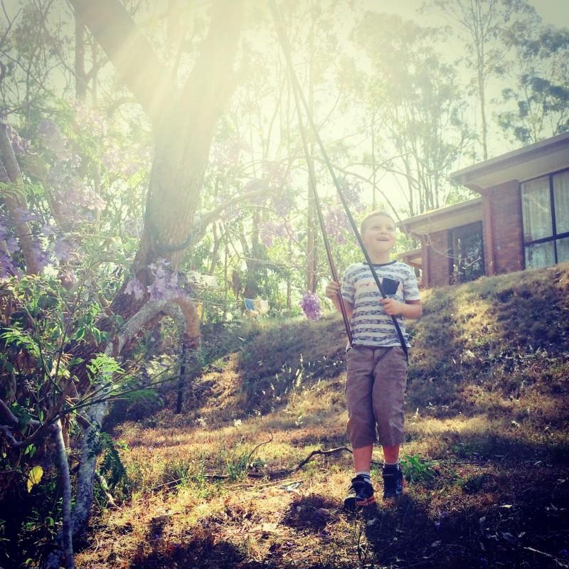 jacaranda tree -- brisbane