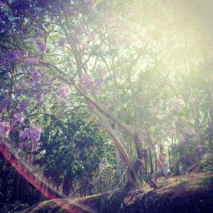 jacaranda tree, brisbane