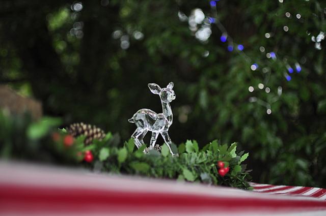 Outdoor Christmas Idea - Use lights in a tree - beafunmum.com