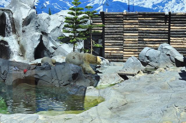 Sea World Polar Bear Shores