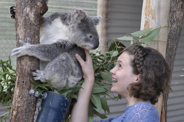 Snakes Downunder - Koalas