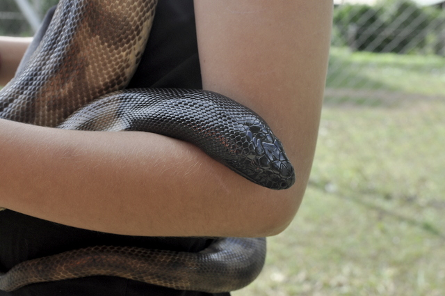Cuddling a snake