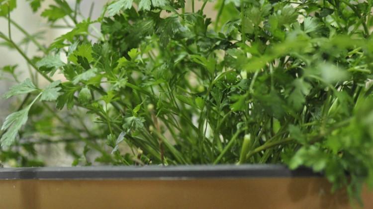 Plant a Pot Garden for Spring!