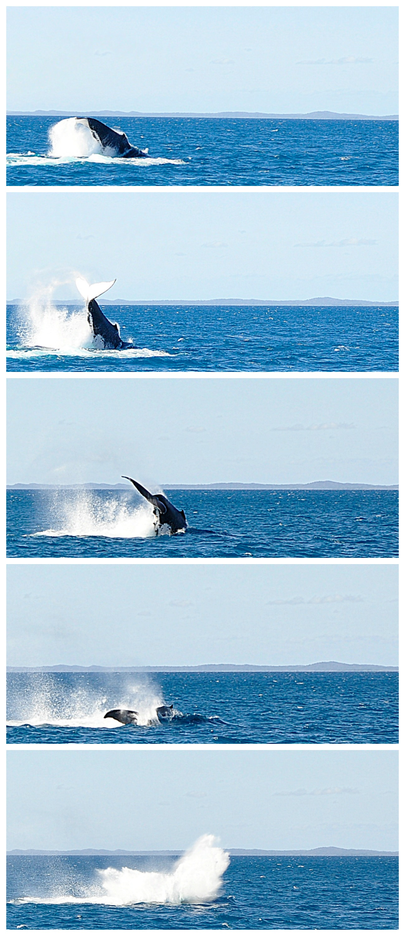 Whale watching at Hervey Bay - Fraser Coast - Queensland