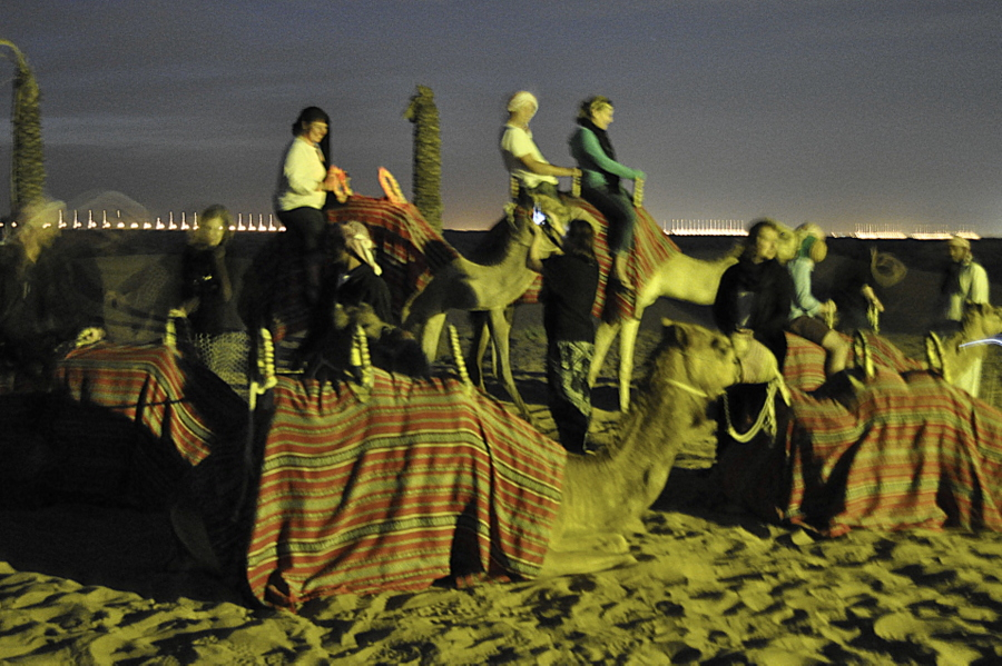 Dubai Camel riding