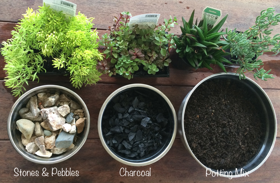 Miniature Terrarium Fairy Garden raw materials required to make an indoor succulent terrarium