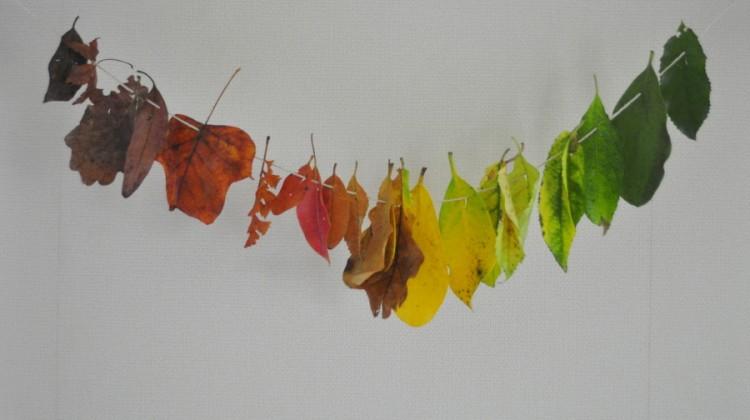 Autumn Rainbow Leaves
