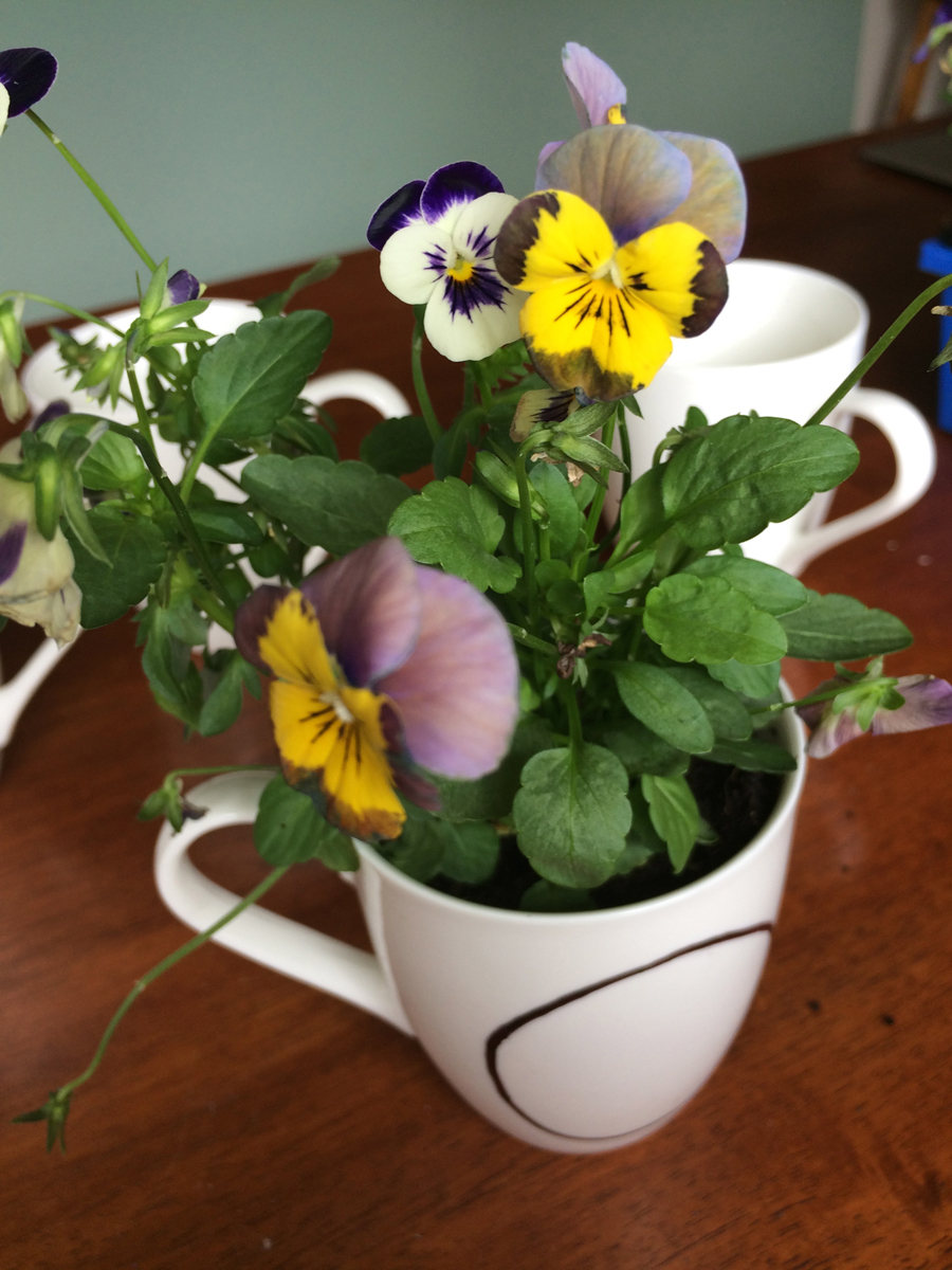 Mother's Day Pansies in a Mug single cup