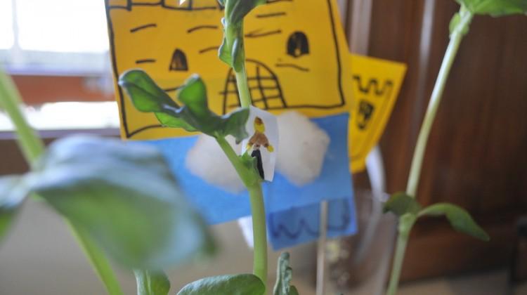 Jack & the Bean Stalk – Gardening with Kids
