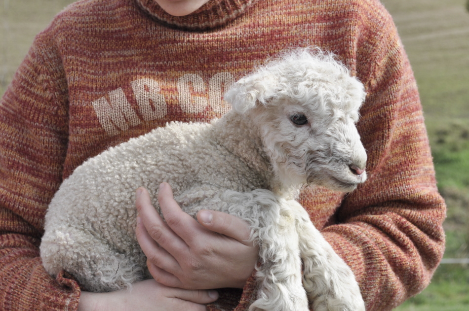 essay on wool