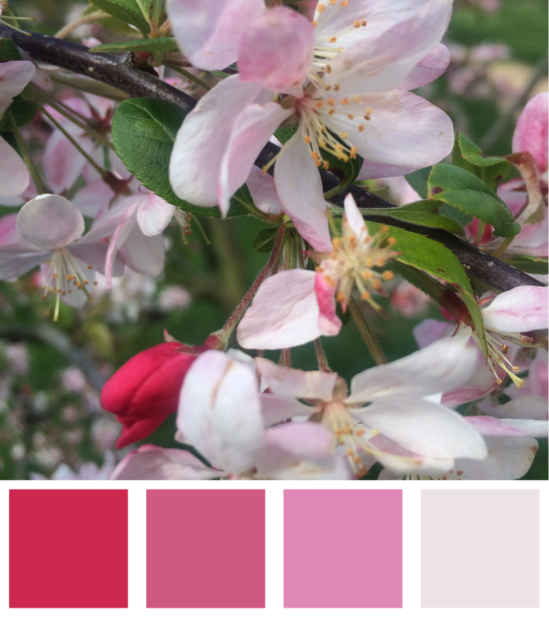 Spring Blossom Blush Colour Palette