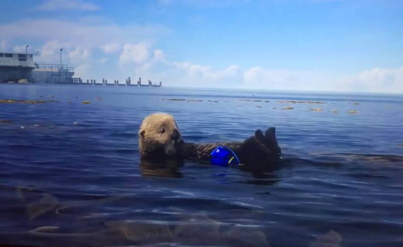 otter finding dory