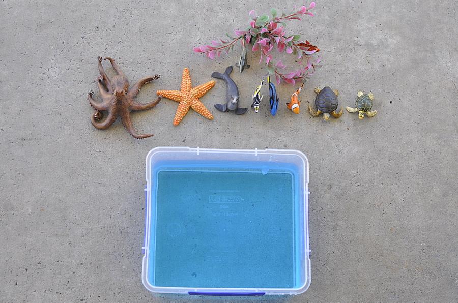 Coral Reef Play