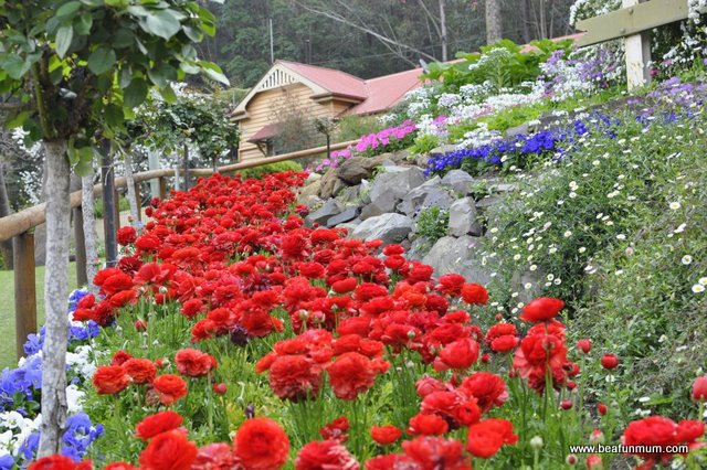 Toowoomba Carnival of Flowers, Spring Bluff Station