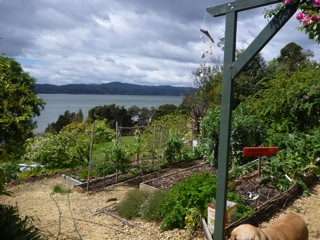 River Cottage B & B Tasmania -- Vegetable garden
