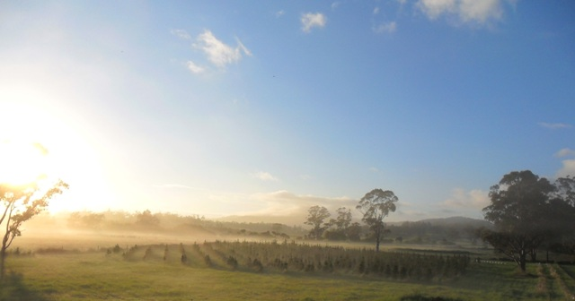 killiecrankie farm -- around the farm  -- live christmas trees tasmania