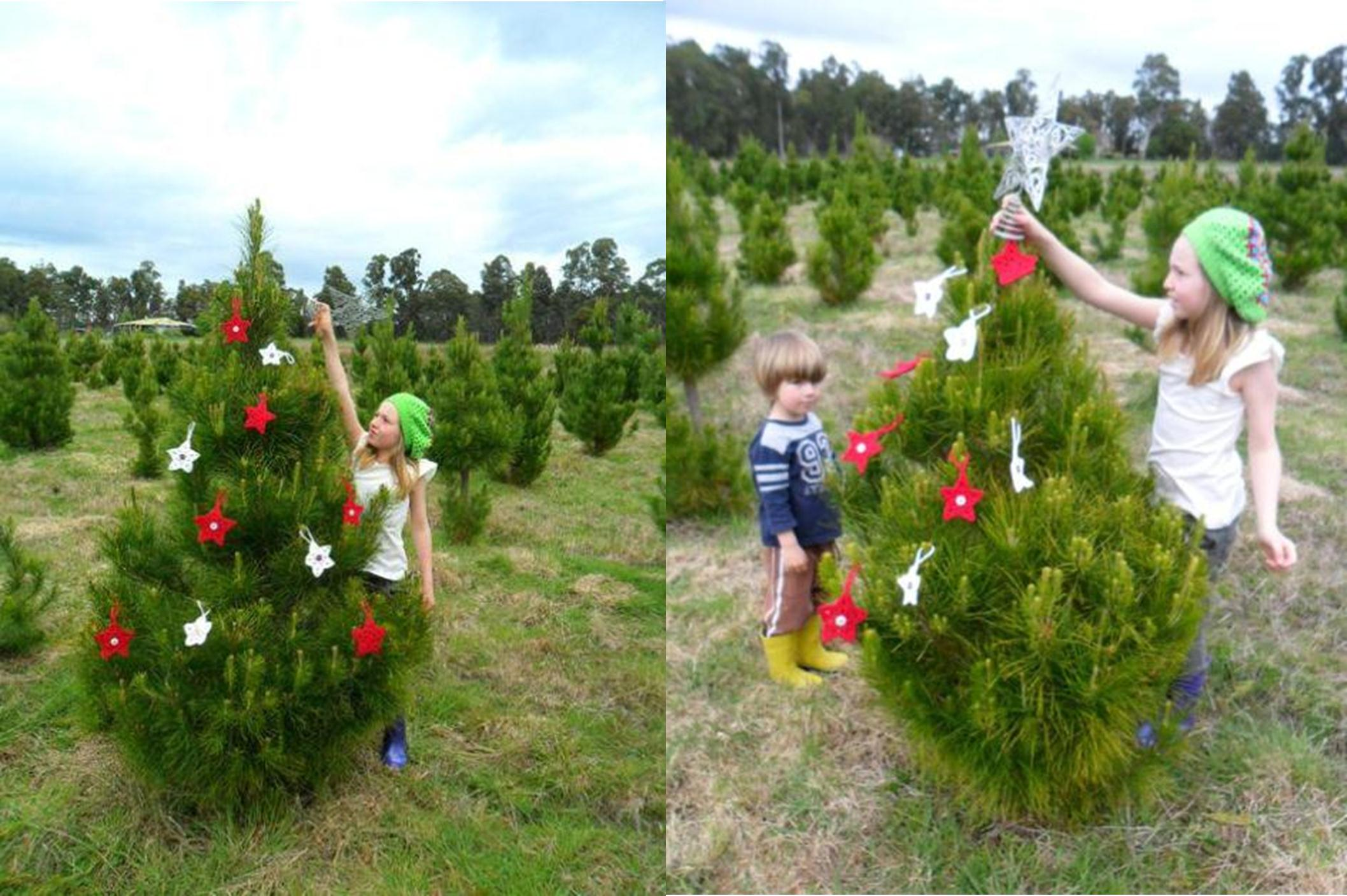 Feature Home: Living on a Christmas Tree Farm – Be A Fun Mum