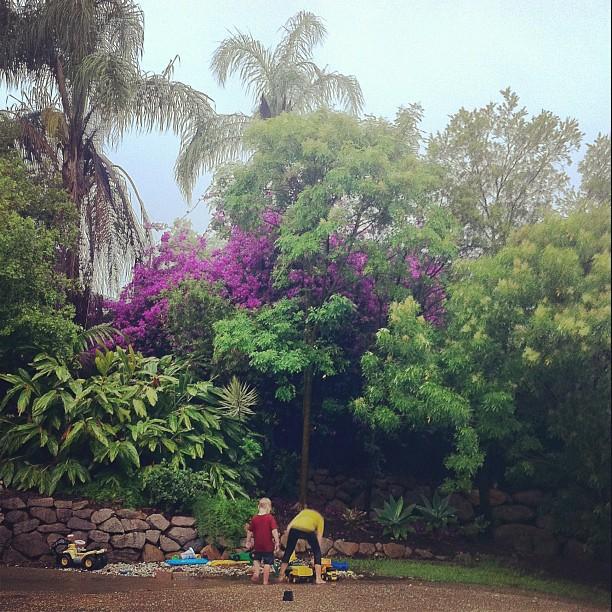 pink / purple bougainvillea