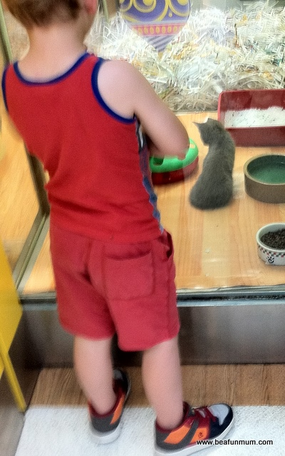 outings for kids -- visit a pet shop