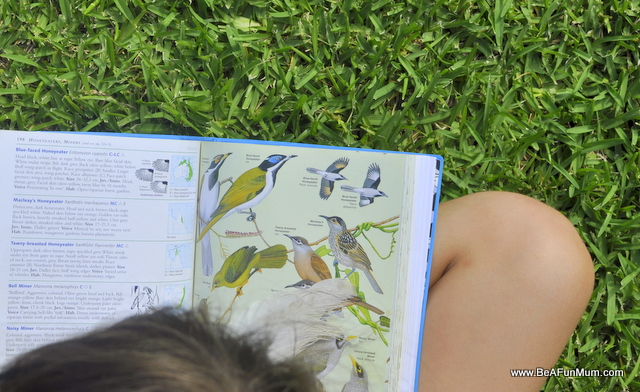 Birdwatching at Jimna -- Field Guide to Australian Birds -- Simpson and Day
