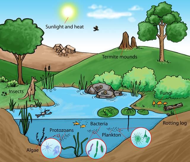 pond eco system