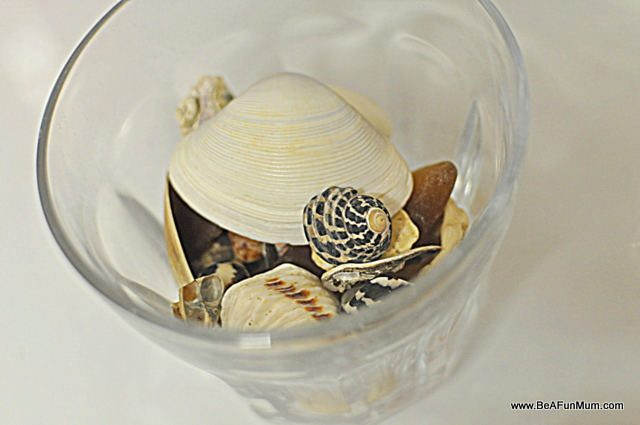 shells in a glass