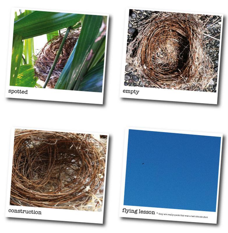 Finding a nest