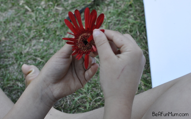 nature crafts -- Decontrusting flowers -- pluck petals