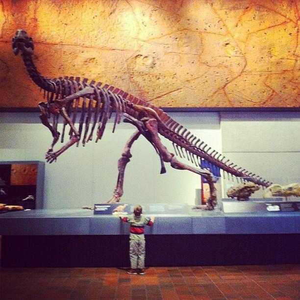 dinosaur at museum