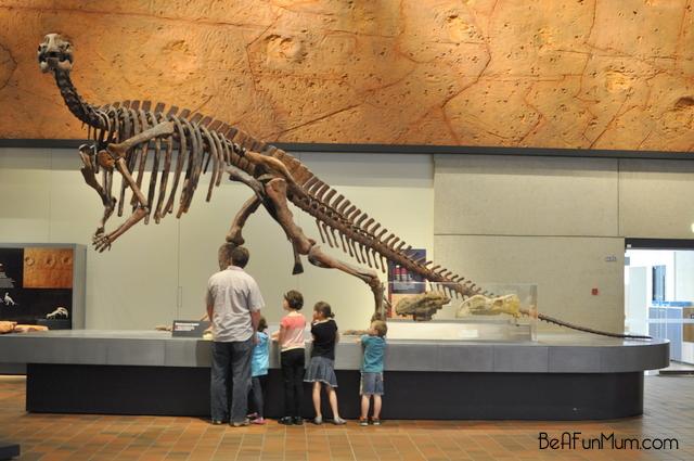 queensland museum -- dinosaur bones
