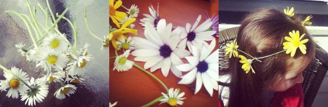 how to make a cute daisy chain for a head wreath, necklace or bracelett