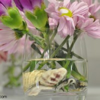 cut flowers -- shells in the bottom of vase